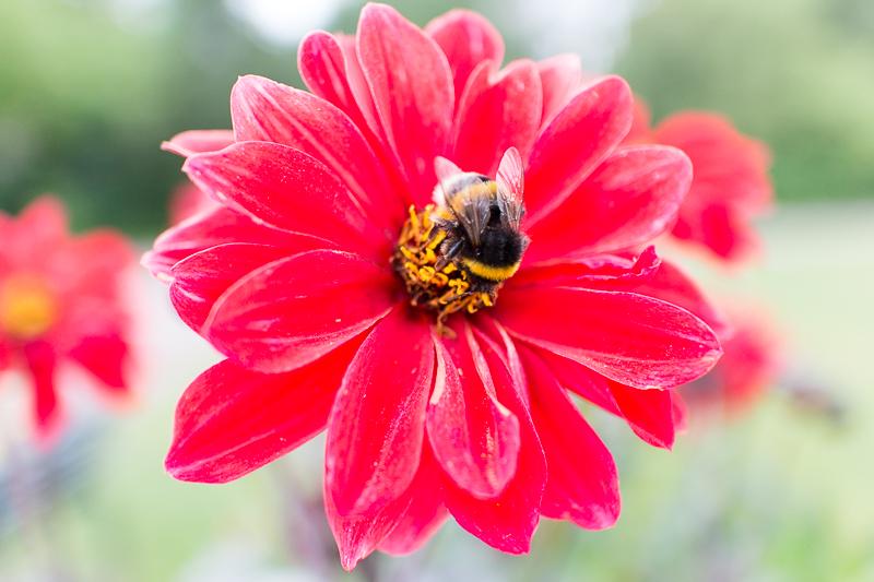 IMAGE: http://www.perspektiv.org/potn/IMG_0219.jpg